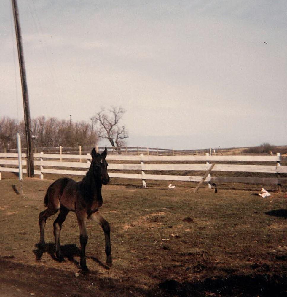 Akazie April 1986