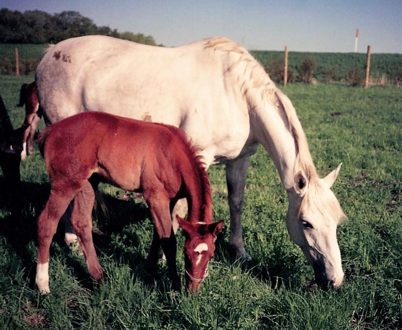 Felicitas und Natascha 1993 small